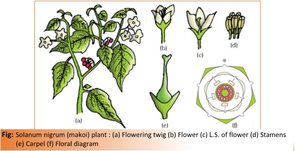 Ch 5 morphology of flowering plants biology for medical entrance 1g ccuart Choice Image