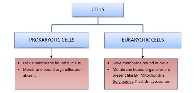 CH 8 – CELL: THE UNIT OF LIFE – Biology for medical entrance exams