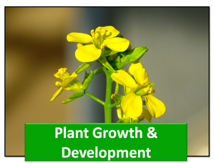 CHAPTER 15 – PLANT GROWTH AND DEVELOPMENT