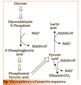 CHAPTER 14 – RESPIRATION IN PLANTS – Biology for medical entrance exams
